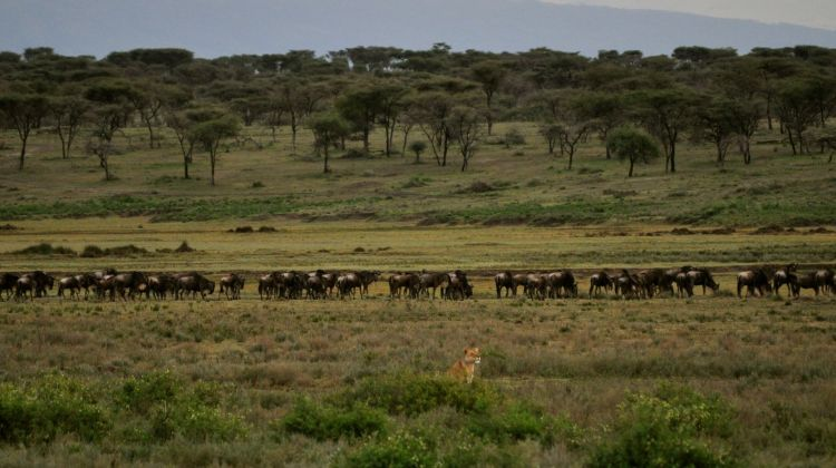 6 Days Bird Watching Safari in Tanzania