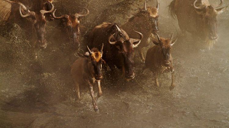 6 Days-Serengeti Great Migration Safari