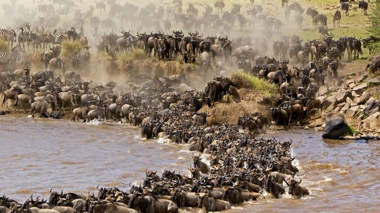6N/7D Great Wildebeest Migration Trekking