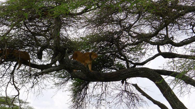 6N/7D Real African Safari Experience