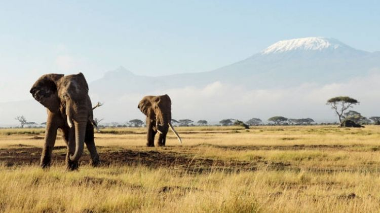 7-day Kenya Budget Safari