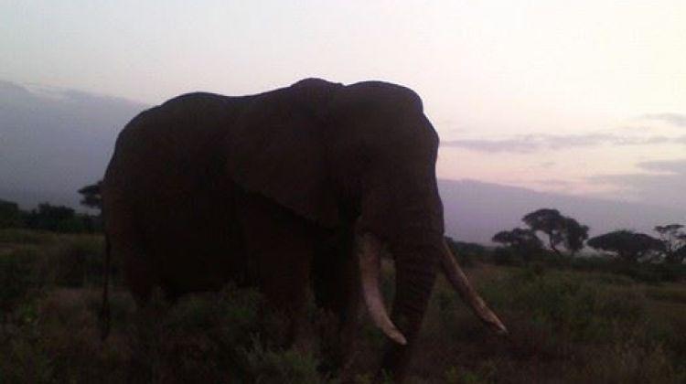 7-day Kenya Budget Safari