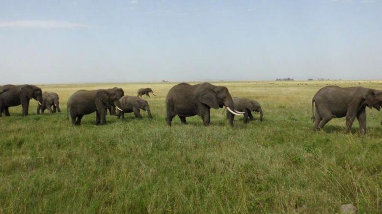 7-Day Magical Encounter of The Big Five Safari