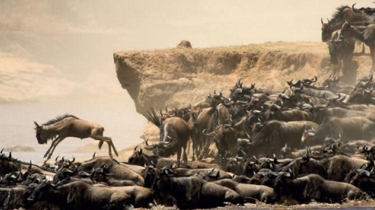 7-Day Safari Adventure in Kenya