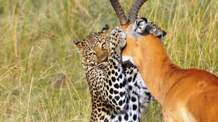 7-Day Safari in Africa: A Week in the Wild