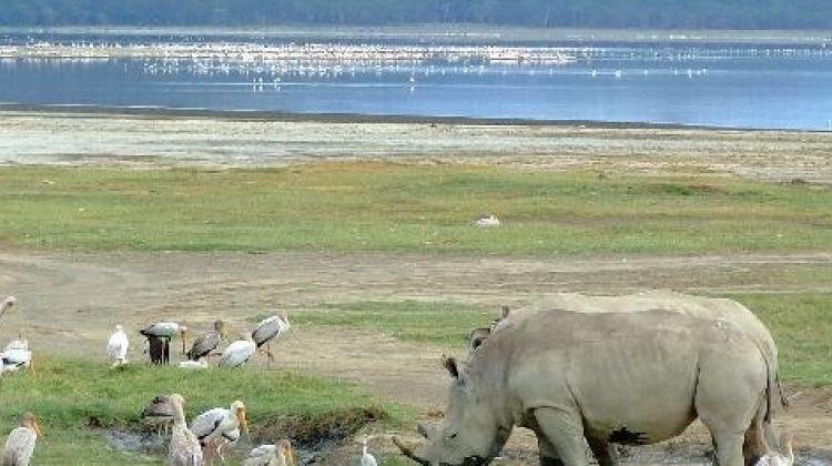 7 Days Maasai Mara/ Lake Nakuru/ Lake Naivasha/ Amboseli