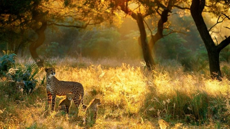 7 Days of Luxurious Air Safari