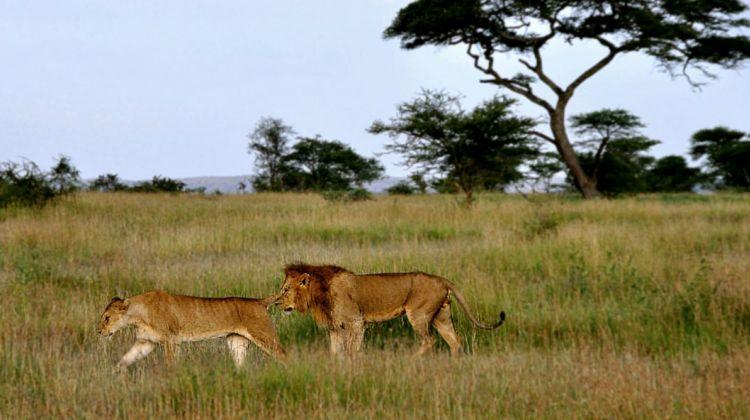 7 Days Tarangire, Serengti, Ngorongo, Manyara & Eyasi