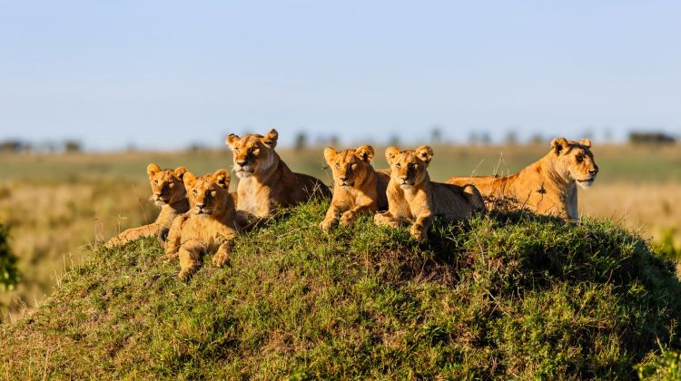 8-Day Best of Kenya Safari: The Ultimate Adventure