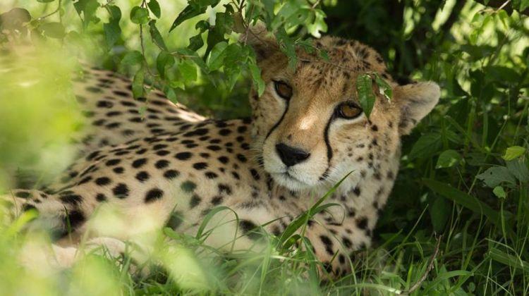 8-Day Best of Kenya Safari: The Ultimate Adventure