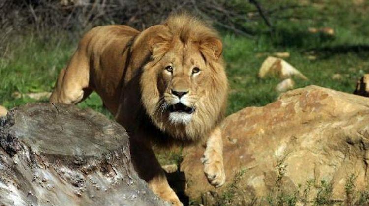 8-Day Best of Uganda Safari