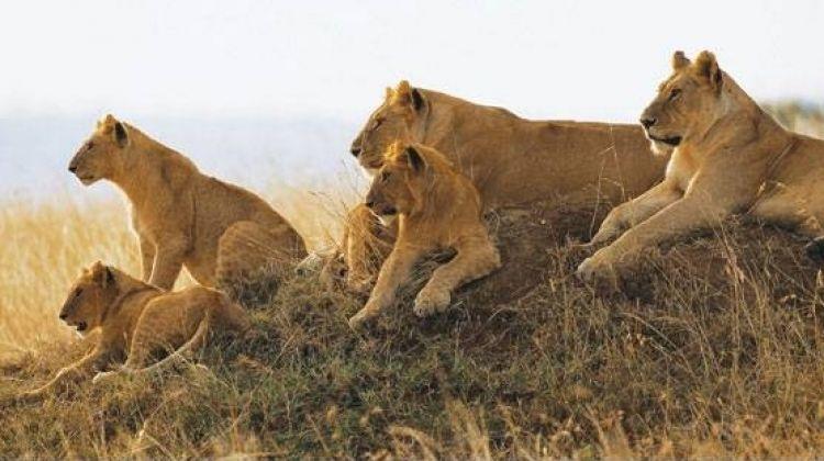 8-Day Camping Safari : Best of Tanzania