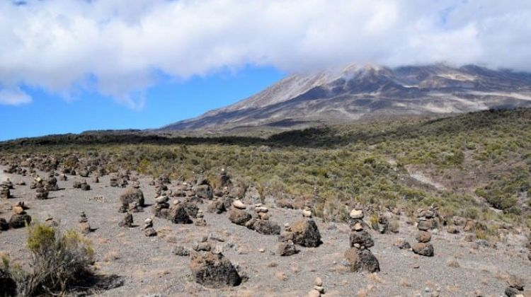 8 Day Mt. Kilimanjaro Trek (Rongai Route)