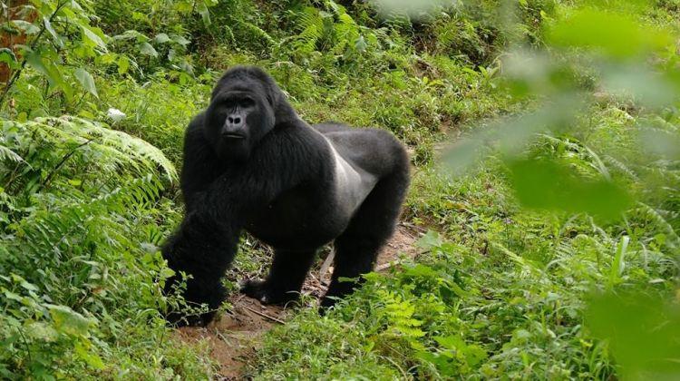 8-Day South Western Uganda Safari