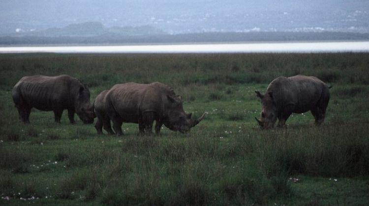8-Day Wildebeest Migration Safari