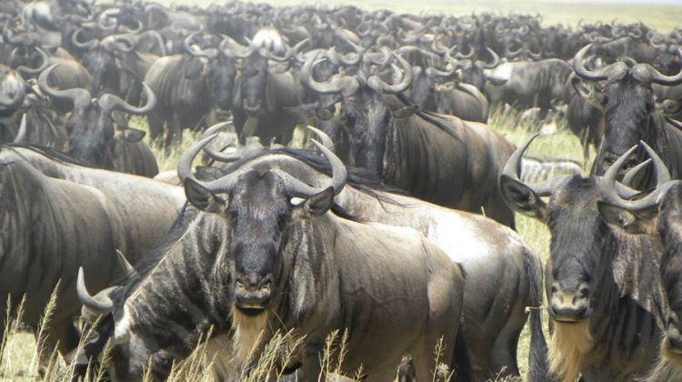8 Days Deluxe Lodge Safaris: A Tanzania Northern Circuit