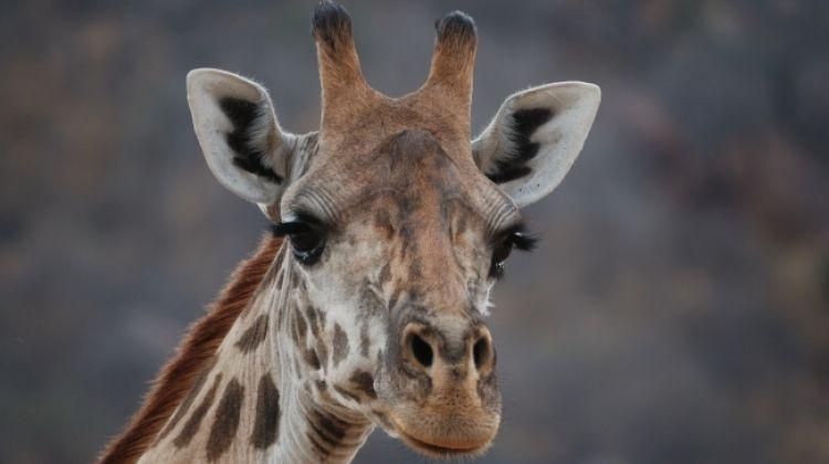 8 Days Tembo Safari in Several National Parks