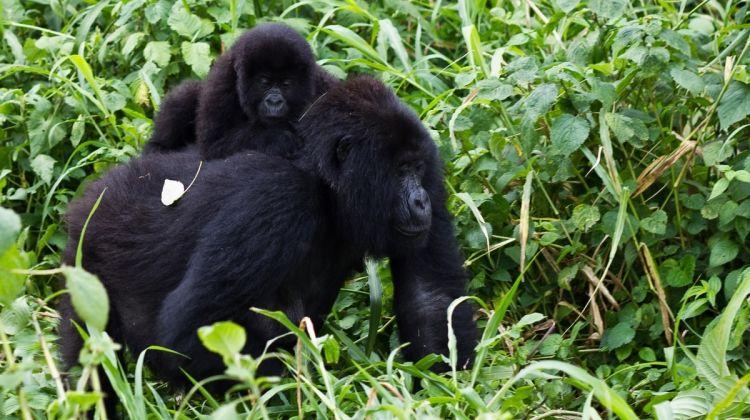 9 Day Gorillas & Lake Bunyonyi Luxury Tour