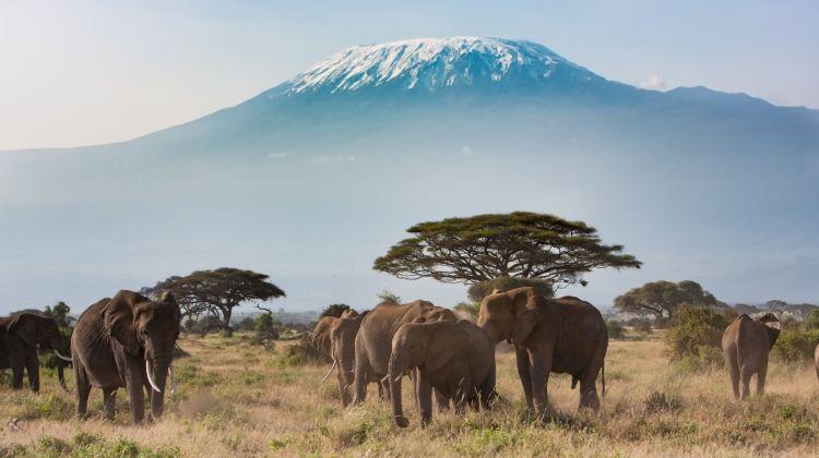 9-Day Mt Kilimanjaro Climb (Lemosho Route)