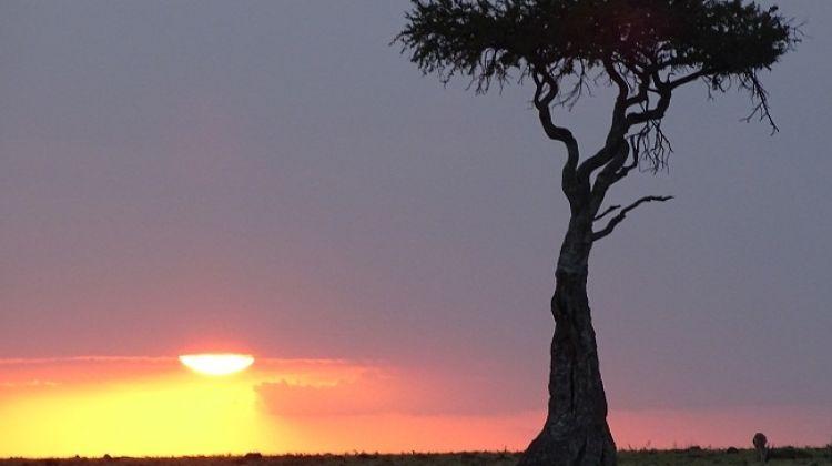 9-Day Safari Tour in Kenya