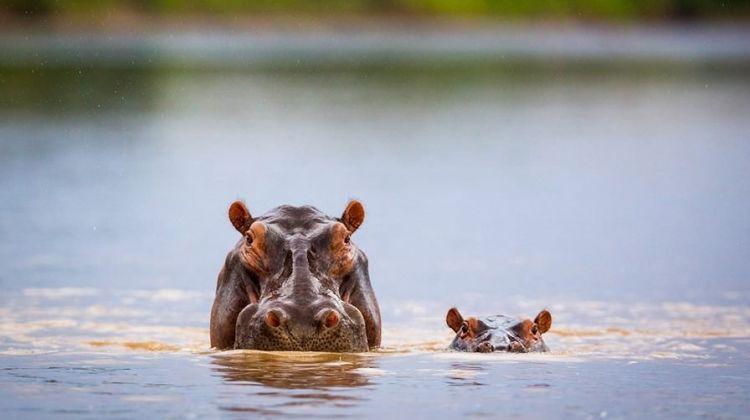 9-Day Tanzania Safari: The Southern Wilds