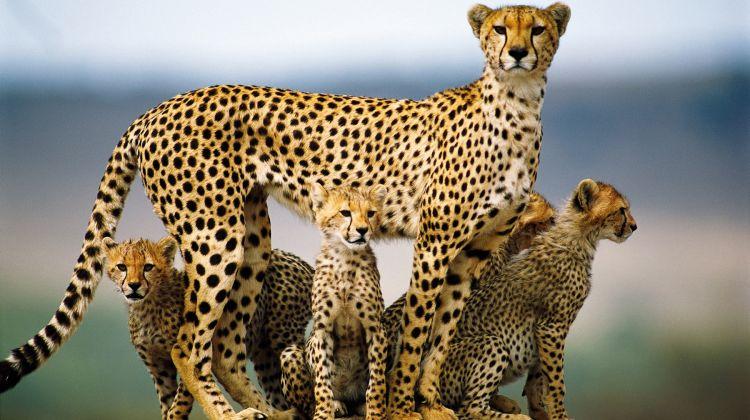 9 Days Classic Kenya & Tanzania Safari From Nairobi