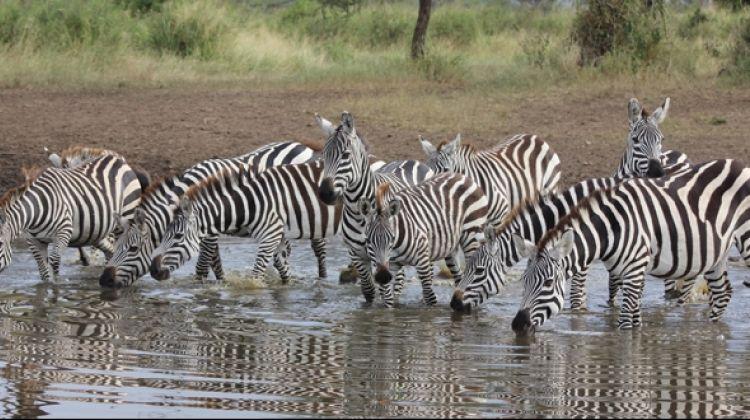 9-Days Ultimate Tanzania North Circuit Safari