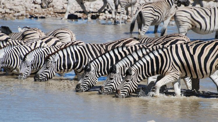 A Classic 6 Day Safari of Tanzania Wildlife and Nature