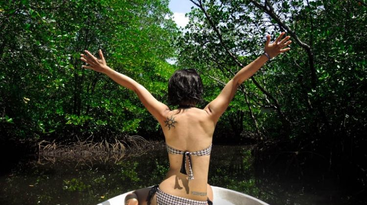 A Day in the Mangrove Forest – Exploration and Snorkeling