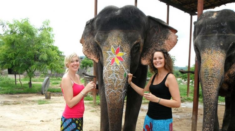 A Day with Elephant in Jaipur
