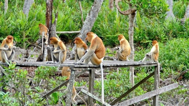 A Glimpse Into Brunei's Wildlife