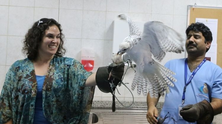 Abu Dhabi Falcon Hospital Tour