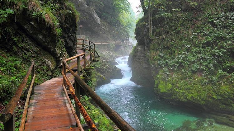 Active in Slovenia