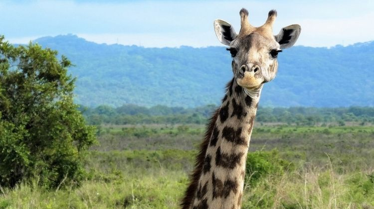 African Insight - Northbound Accommodated 7 Days