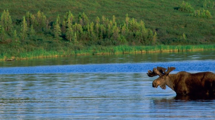 Alaskan Wildlife & Wilderness