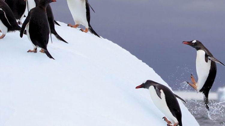 Antarctic Peninsula, Falkland Islands & South Georgia