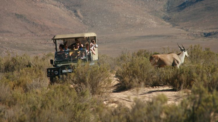 Aquila Wildlife Safari Tour