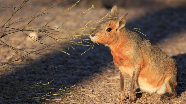 Argentina Wildlife Holiday