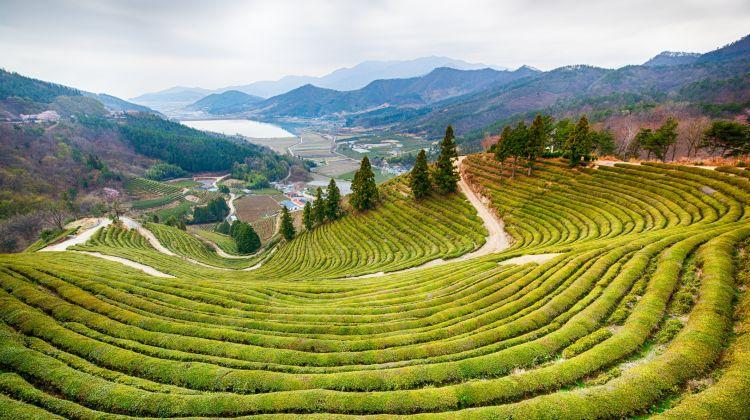 Around South Korea Tour