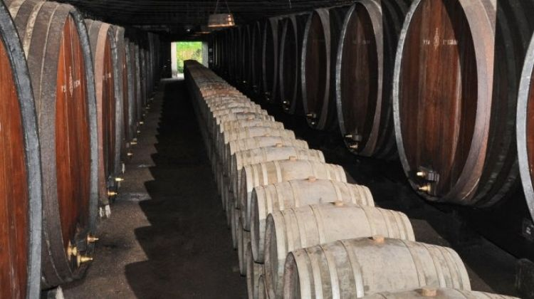Arrábida & Sesimbra Wine Tasting half day