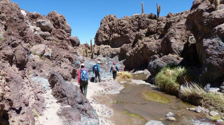 Atacama Adventure - Nature Tour in the Atacama Desert