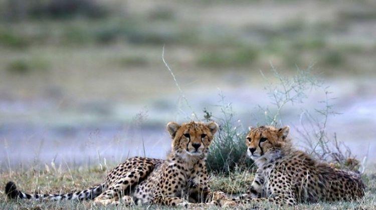 Awesome Tanzania Luxury Safari