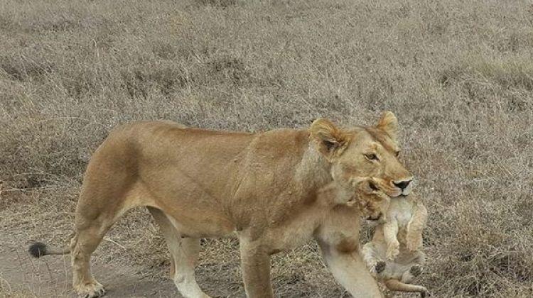 Awesome Tanzania Mid-range Safari Tour