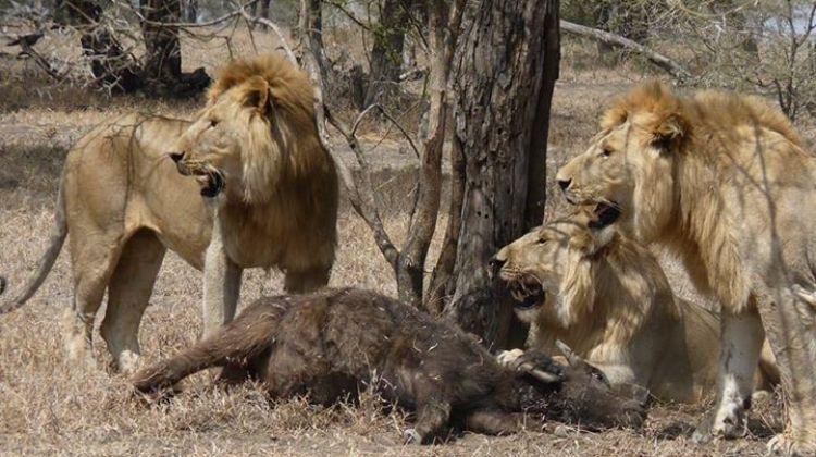 Awesome Tanzania Standard Budget Safari tour