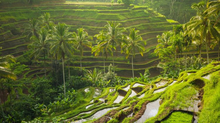 Bali Premium Holiday Package (8 Days)
