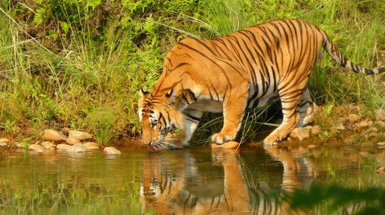 Bardia National Park 5 Days/ 4 Nights