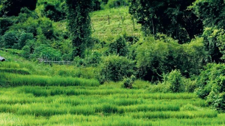 Beautiful Northern Thailand