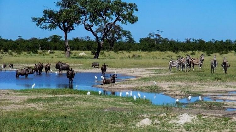 Best of Botswana Safari 7D/6N