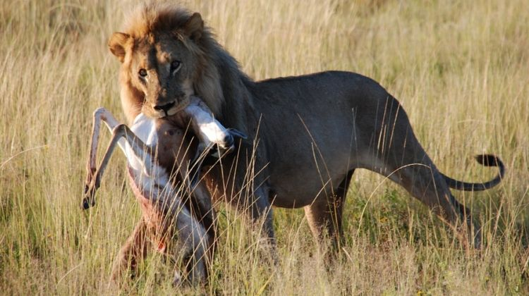 Best of East Africa Wildlife & Safaris