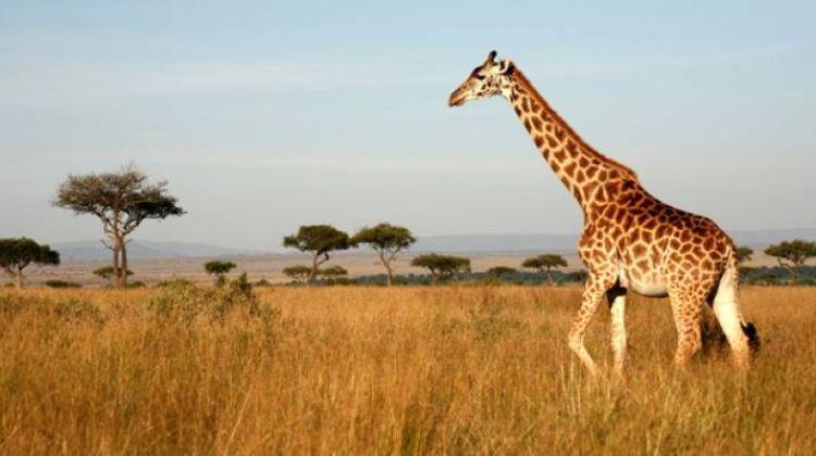 Best of Kenya & Tanzania - 11 days